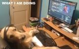 DotA dog is going wild