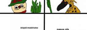teemu's mushrooms